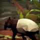 Media Monks - WWF Into The Wild - Thumbnail V